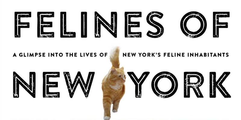 Purr-ban Life: Felines of New York