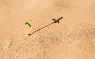 plant sprouting in the sand