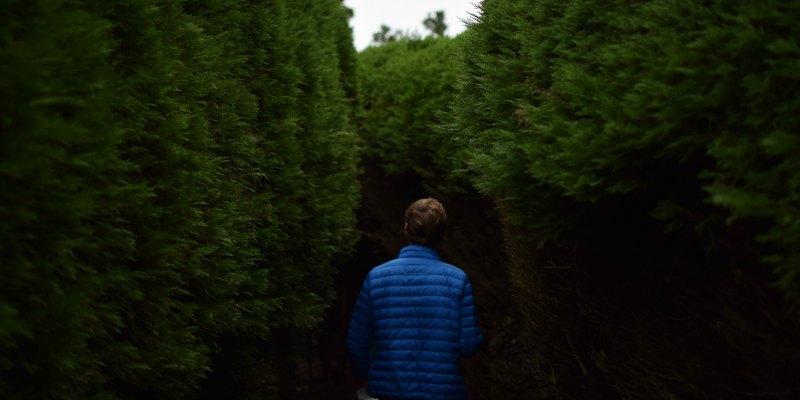 man in blue coat walking through hedges