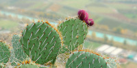 Happy Cactus: Cacti, Succulents and More
