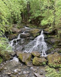 Cedar Mill Falls with leafy green foilage